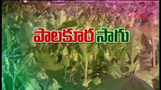 పాలకూర సాగులో మెళకువలు : Spinach (Palak) Cultivation | Raithe Raju - CVRNEWSOFFICIAL