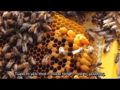 Γιατί να μην τρώς μέλι - Why you shouldn't eat honey