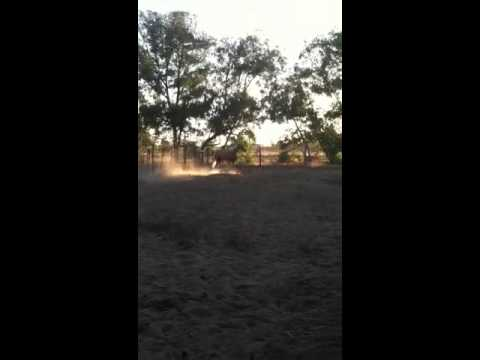 My mare is in heat?!