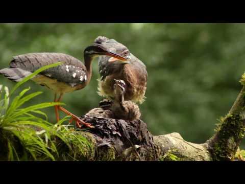Costa Rica Birdwatching Republic