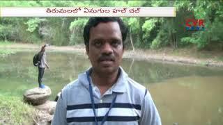తిరుమలలో భక్తులను హడలెత్తిస్తున్న ఏనుగుల గుంపు : Elephants Group Hulchul in Tirupati | CVR News - CVRNEWSOFFICIAL