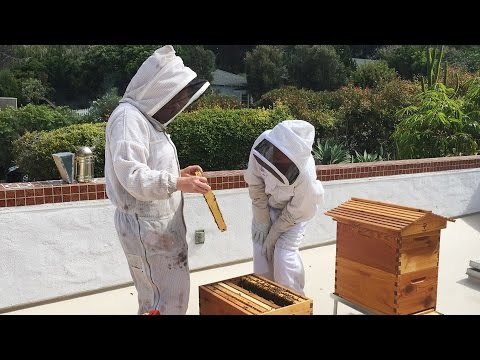 How to deal with a poisoned beehive with Janet and her mentor Hilary Kearney