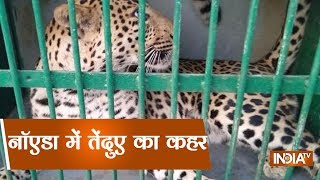 Leopard Causes Chaos In A Village Near Greater Noida - INDIATV
