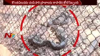 Python Attacks on Forest Officer in Tirumala Chandanavanam    NTV - NTVTELUGUHD