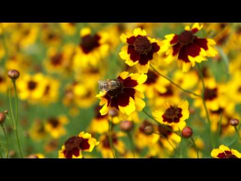 SONY alpha NEX-5 HD Movie test