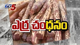 Auction of Red Sanders Begins | More than Crore for Ton :TV5 News - TV5NEWSCHANNEL