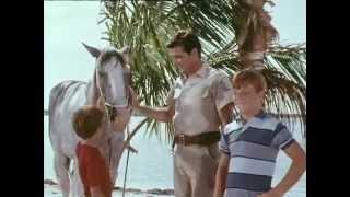 42 Flipper und das Zirkuspferd