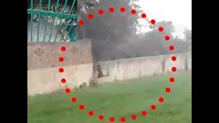 Leopard caught in Greater Noida's Sadullapur village - TIMESOFINDIACHANNEL