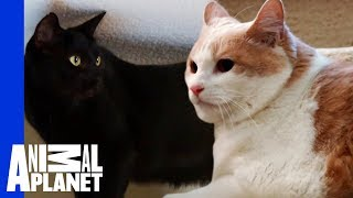 Jackson Galaxy Helps Scout The Cat Face His Fear! | My Cat From Hell - ANIMALPLANETTV