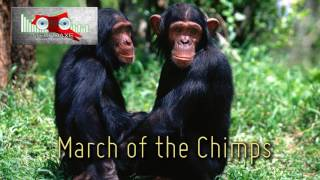 Royalty Free :March of the Chimps