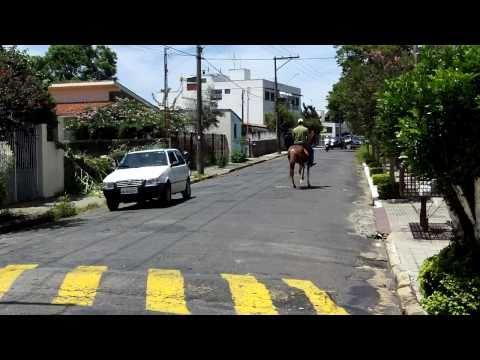 Égua Mangalarga Paulista - Marca JOF