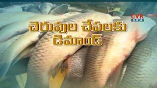 చెరువు చేపలకు భారీగా పెరిగిన డిమాండ్ : Demand for Pond fishes in Visakhapatnam | Raithe Raju - CVRNEWSOFFICIAL
