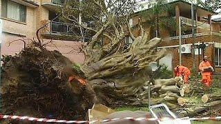 مقتل ثلاثة أستراليين في عاصفة عنيفة ضربت جنوب شرق البلاد