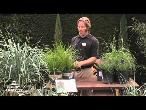 Low Water Ornamental Grasses with James Maxwell