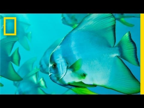 National Geographic Live! - Brian Skerry: Ocean Soul