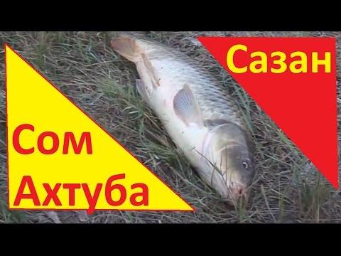 рыбалка на сома и на сазана на волге