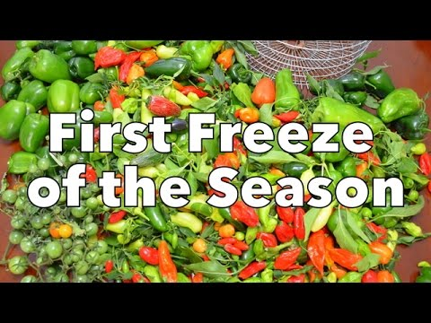 Gardening: First Freeze of the Season