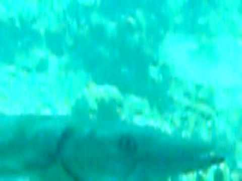 From Naked Women Underwater With Dolphins Woman Scuba Diving On