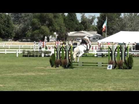 Cornet Fever 1.30 Meter Jumpers