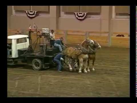 Runaway at Draft Horse Pull