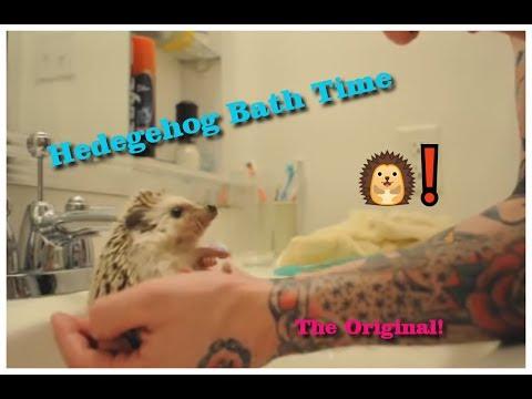 קיפוד מקבל אמבטיה
