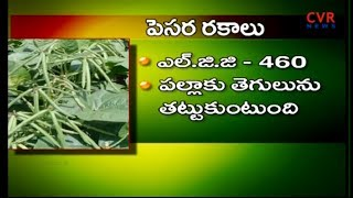 మినుములు, పెసర సాగు | Tips to Lentils & Greengram's Cultivation | Raithe Raju | CVR NEWS - CVRNEWSOFFICIAL