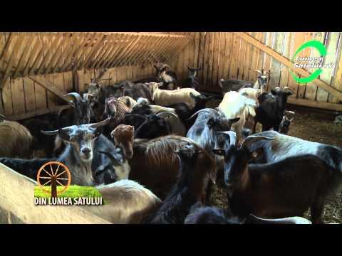 Profit din cresterea caprelor - Lumea Satului TV
