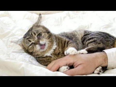 Kitten Video Video