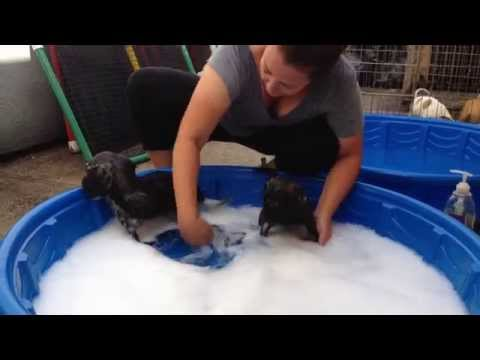 Bath Time for Ezzie and Ellie Mae!  For adoption in NY!