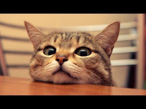 Śmieszne koty [#8]