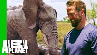 Jabu The Elephant Gets A Life-Changing Leg Brace | Extended Cut | Dodo Heroes - ANIMALPLANETTV