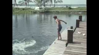 31 Flipper hilft der Wissenschaft