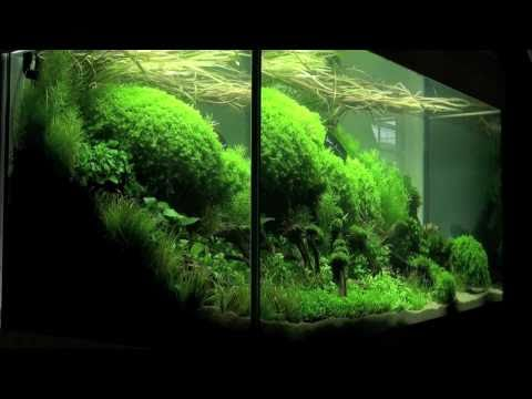 Aquascaping - Aquarium Ideas from The Art of the Planted Aquarium 2011, part 1