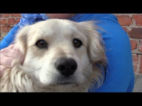 Jak skutecznie usuwać kleszcze u psów  ?