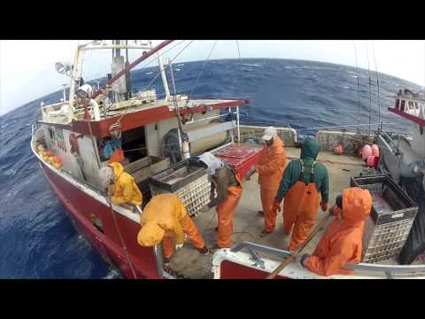 Wild Caught swordfish documentary 2012