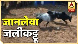 Many injured during bull taming sport of jallikattu in Tamil Nadu - ABPNEWSTV
