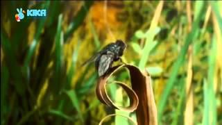 18 Keks und die Fliegenfalle