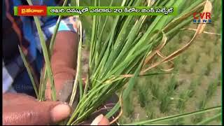 వరిలో జింకు ధాతు లోపం - తీసుకోవాల్సిన చర్యలు  | Raithe Raju | CVR NEWS - CVRNEWSOFFICIAL