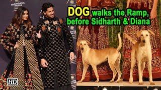 Stray Dog walks the Ramp, before Sidharth & Diana - IANSLIVE