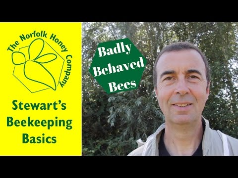 How to deal with Badly Behaved Bees - #Beekeeping Basics - The Norfolk Honey Co.