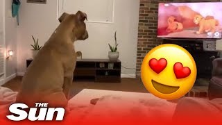 Adorable dog reacts in the cutest way to Lion King's saddest scene - THESUNNEWSPAPER