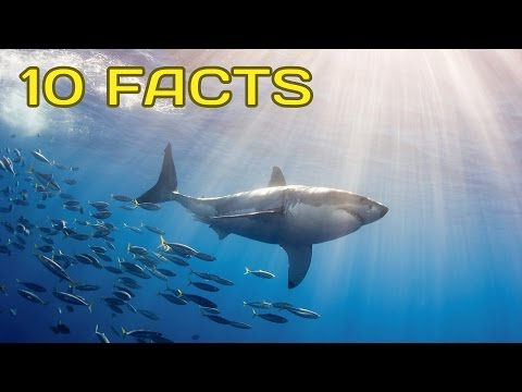10 Amazing Facts that Will Change How You View Sharks | Amazing Earth