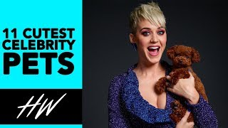 Top 11 Cutest CELEBRITY PETS! - HOLLYWIRETV