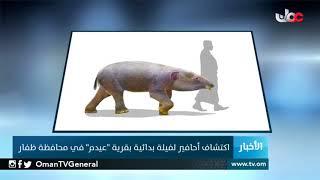 """اكتشاف أحافير لفيلة بدائية بقرية """"عيدم"""" في محافظة ظفار"""