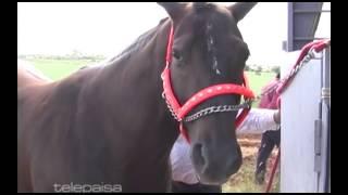 Carreras de caballos en San Jer�nimo (Guadalupe, Zacatecas)