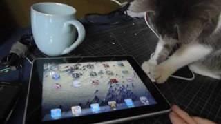 חתול חוקר אייפד