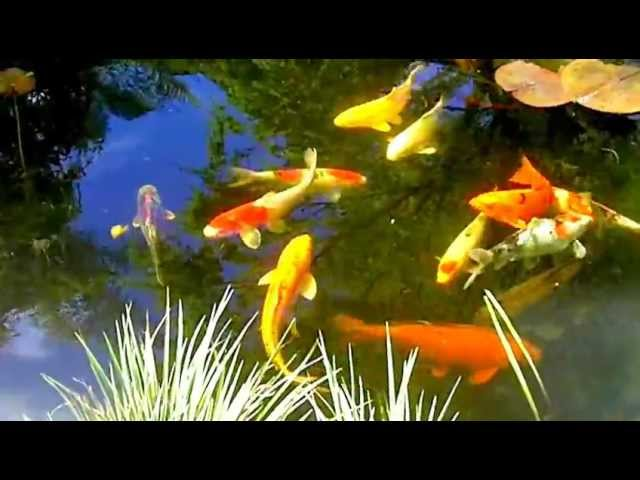 Koi Pond by Enviroscape LA Manhattan Beach