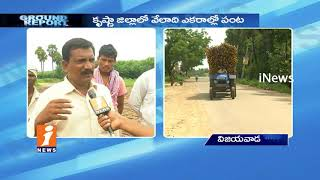 Subabul Farmers Demands For Support Price In Krishna District | Ground Report | iNews - INEWS