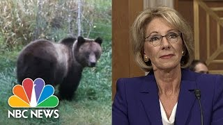 Superintendent Debunks Betsy DeVos On Guns To Protect Against Grizzlies | NBC News - NBCNEWS