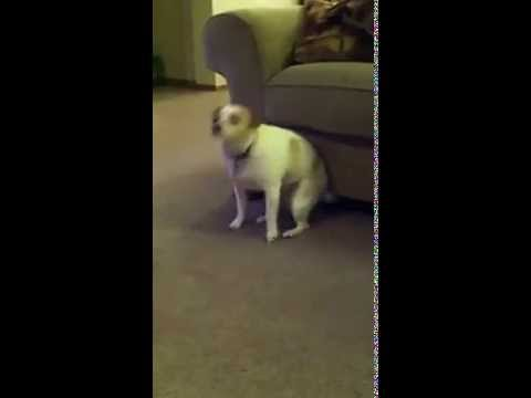 Dog Dancing To Song By Eminem And Nate Dogg